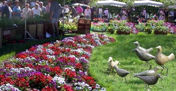 Pays voironnais march s aux fleurs aux plantes for Jardin aux fleurs