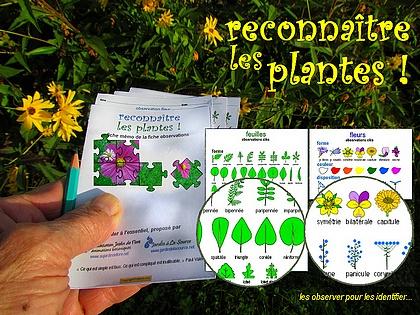 Reconnaitre les plantes observer identifier for Tous les plantes