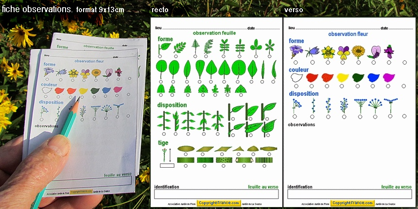 Reconna tre plantes t moin fiche observations jardin de for Association plantes jardin