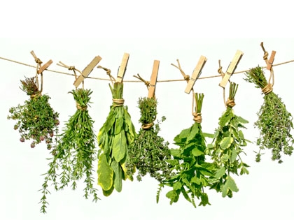 Les Plantes Aromatiques Du Jardin De La Source