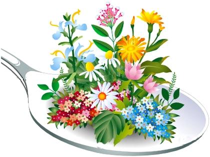 plantes et fleurs m dicinales au jardin de la source. Black Bedroom Furniture Sets. Home Design Ideas